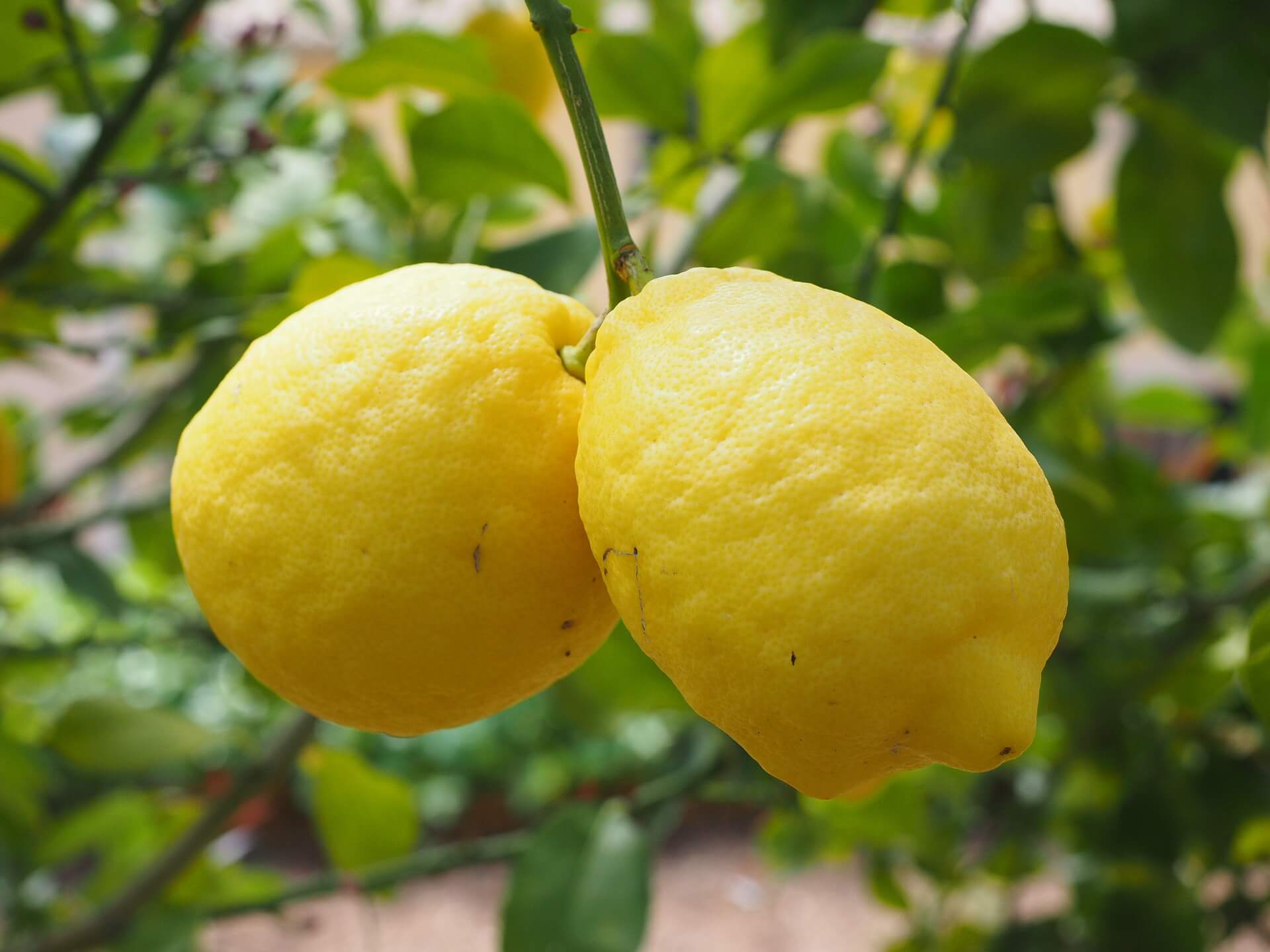Lemons - How humour can make your social media campaign a success
